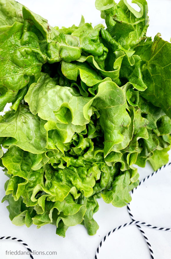 lettuce from CSA produce box