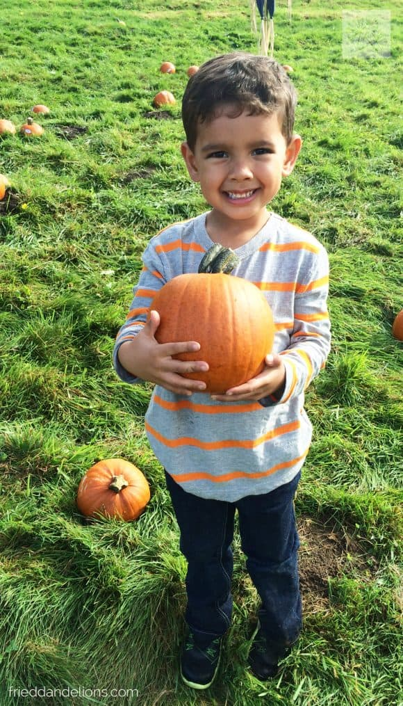small boy holding a pumpkin in a pumpkin patch