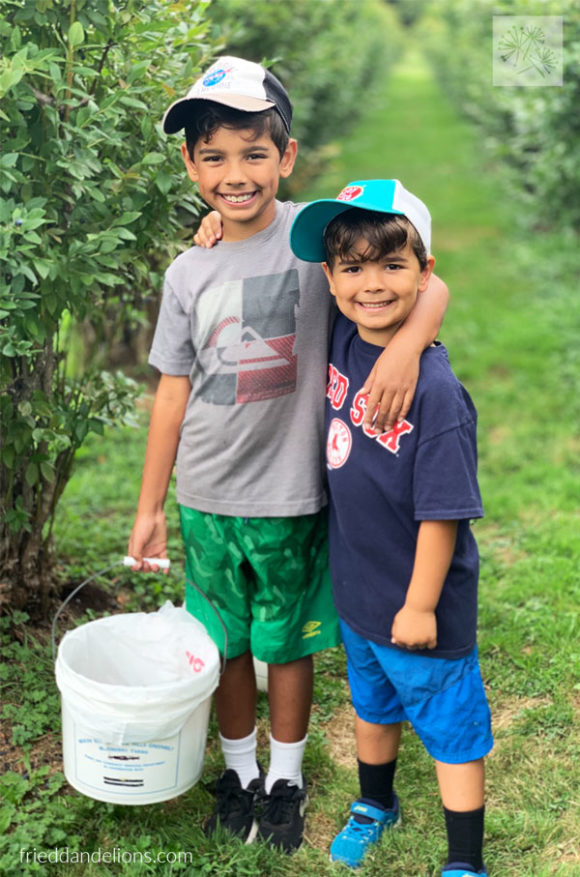 two young boys picking blueberries in a field, wearing baseball hats